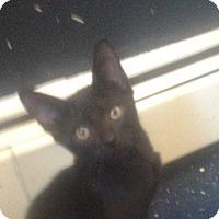 Adopt A Pet :: Poseiden - Trevose, PA