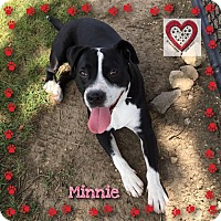 Adopt A Pet :: Minnie - Elgin, IL