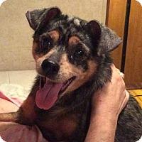Adopt A Pet :: Delilah - Oakland, FL