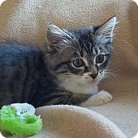 Adopt A Pet :: Mariah - Ventura, CA