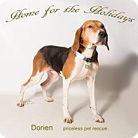 Adopt A Pet :: Dorien - Chino Hills - Chino Hills, CA