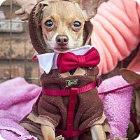 Adopt A Pet :: Toby - San Marcos, CA