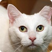 Adopt A Pet :: BONNIE - Royal Oak, MI