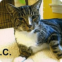 Adopt A Pet :: O.C. - Medway, MA