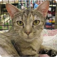 Adopt A Pet :: Yolanda - The Colony, TX