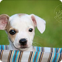 Adopt A Pet :: Lucille - Albany, NY