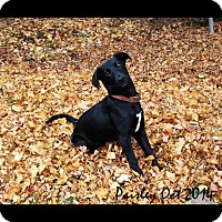 Adopt A Pet :: Paisley - Silver Lake, WI