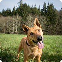 Adopt A Pet :: Copper - Tillamook, OR