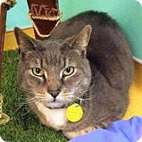 Adopt A Pet :: Nelson - Hudson, NY