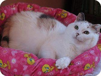 Calico Cat for adoption in St. Paul, Minnesota - Matilda