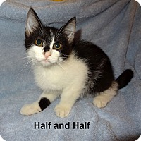 Adopt A Pet :: Half and Half - Bentonville, AR