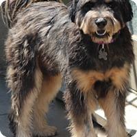 Adopt A Pet :: Jack - adoption pending - Norwalk, CT