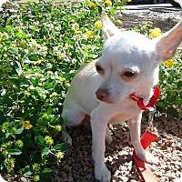 Adopt A Pet :: Joey formerly Brain - Las Vegas, NV