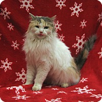 Adopt A Pet :: Regena - Redwood Falls, MN