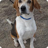 Adopt A Pet :: Arthur - Larned, KS