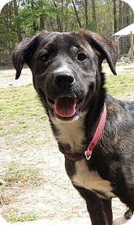 Adopt A Pet :: Deputy  - Snow Hill, NC