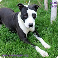Adopt A Pet :: Miss Lady - Needs Foster - Bloomington, MN