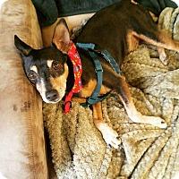 Adopt A Pet :: Odie - Shrewsbury, NJ