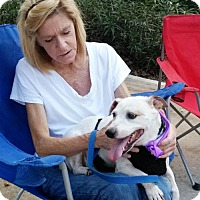 Adopt A Pet :: HOWARD- Emotional Support Animal - DeLand, FL
