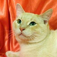 Adopt A Pet :: Poindexter - St. Louis, MO