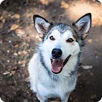 Adopt A Pet :: Donkey - Pitt Meadows, BC