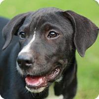 Adopt A Pet :: Maxwell - Nanuet, NY