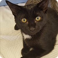 Adopt A Pet :: Micki - Berkeley Hts, NJ
