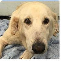 Adopt A Pet :: Homer - Springdale, AR