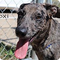Adopt A Pet :: Biloxi - Texarkana, AR