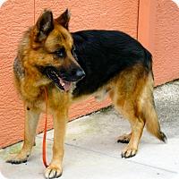 Adopt A Pet :: Help Mr. - Ft Myers Beach, FL