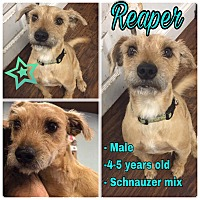 Adopt A Pet :: Reaper - Colmar, PA