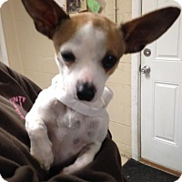 Adopt A Pet :: Mack - Albemarle, NC