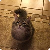 Adopt A Pet :: Keisha - Phoenix, AZ