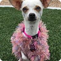 Adopt A Pet :: Tinkerbell - Las Vegas, NV
