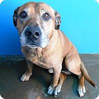 Adopt A Pet :: Mack - Redding, CA