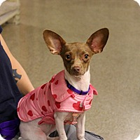 Adopt A Pet :: Roo - Yuba City, CA