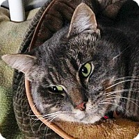 Adopt A Pet :: Radar - Port Angeles, WA