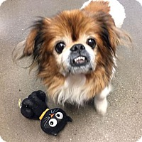 Adopt A Pet :: Pancho - Akron, OH