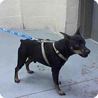 Adopt A Pet :: DUBOIS - Conroe, TX