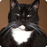 Adopt A Pet :: DEWEY - Laingsburg, MI