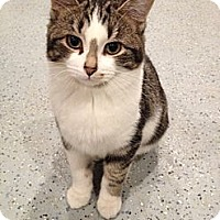 Adopt A Pet :: Winifred - Byron Center, MI