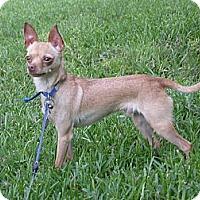 Adopt A Pet :: Rudy - Waller, TX