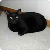 Adopt A Pet :: Dusk - Toronto, ON