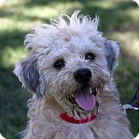 Adopt A Pet :: Buddy - Santa Ana, CA