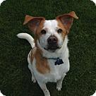 Adopt A Pet :: MI - Champ