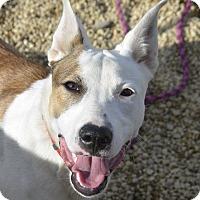 Adopt A Pet :: Meeko - Meridian, ID