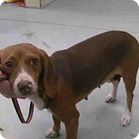 Adopt A Pet :: A263955 - Conroe, TX