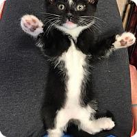 Adopt A Pet :: Phoenix - Island Park, NY