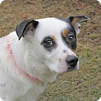 Cattle Dog Mix Dog for adoption in Woodstock, Illinois - Ralph