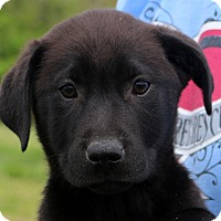 Adopt A Pet :: Kerry~ meet me! - Glastonbury, CT